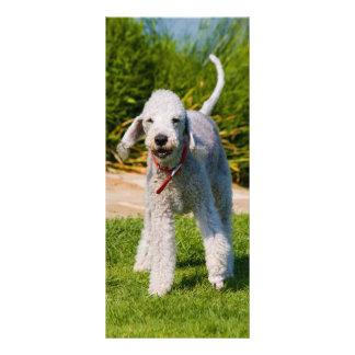 Bedlington Terrier dog cute photo custom Custom Rack Card