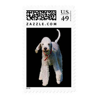 Bedlington Terrier dog cute photo postage stamp