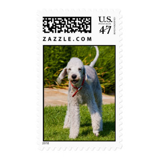 Bedlington Terrier dog cute photo postage stamp