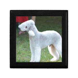 Bedlington Terrier lindo Cajas De Joyas