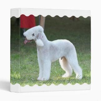 Bedlington Terrier lindo