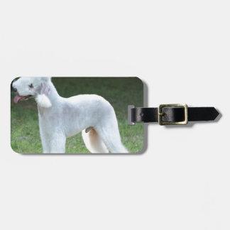 Bedlington Terrier lindo Etiquetas Maleta