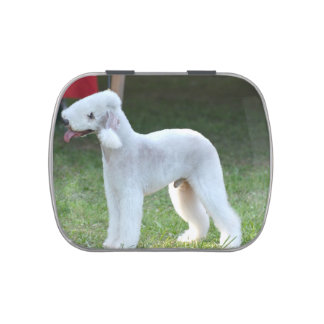 Bedlington Terrier lindo Frascos De Dulces
