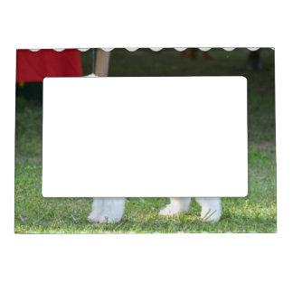 Bedlington Terrier lindo Marcos Magnéticos Para Fotos