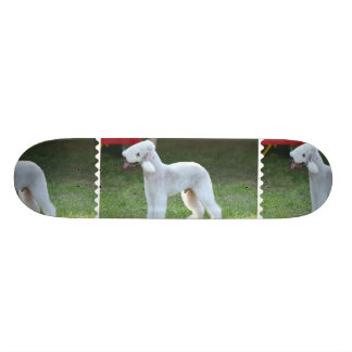 Bedlington Terrier lindo Tablas De Patinar
