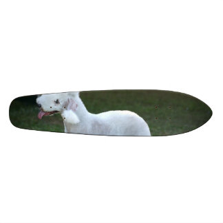 Bedlington Terrier lindo Monopatín