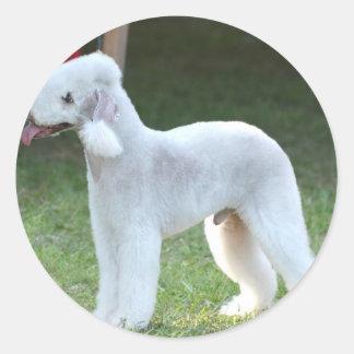 Bedlington Terrier lindo Etiquetas Redondas