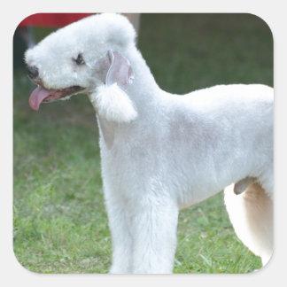 Bedlington Terrier lindo Pegatinas Cuadradases
