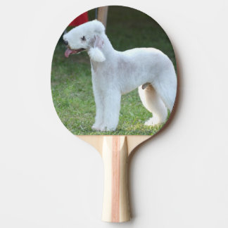 Bedlington Terrier Pala De Tenis De Mesa