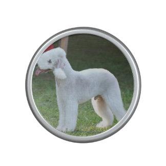 Bedlington Terriers Speaker
