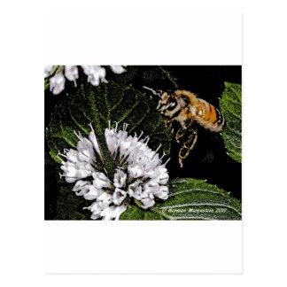 bee a postcard