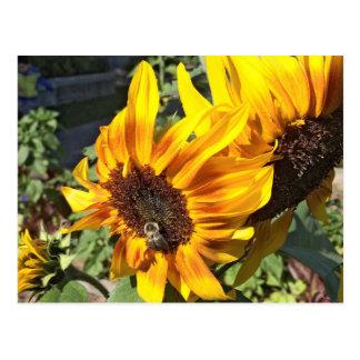 Bee a Sunflower Postcard