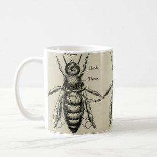 Bee Anatomy Illustration - Vintage Design Mug