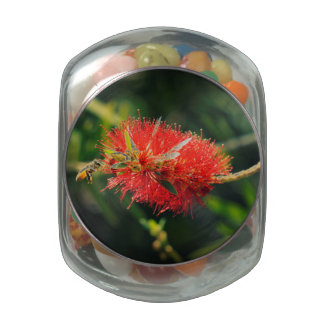 Bee and a Bottlebrush Glass Jar