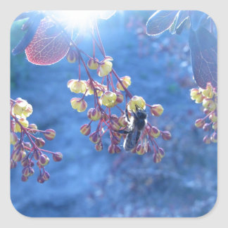 Bee and Berberis Flowers Square Sticker