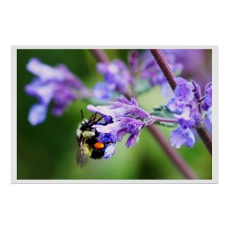 Bee and Blue Blossom # 2