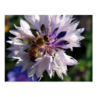 Bee and Blue Flower Postcard