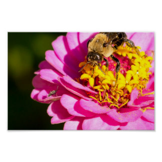 Bee and Bug On Purple Pink Flower Poster