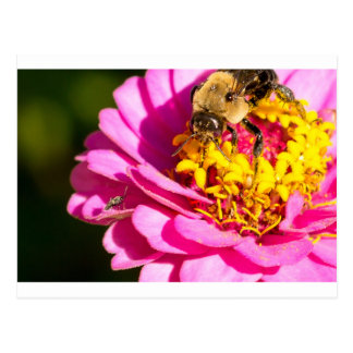 bee and bug standing on a purple flower postcard