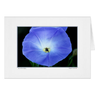 Bee and Morning Glory Greeting Card