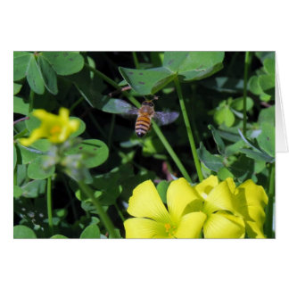 Bee and Nodding-wood Sorrel Blossom Card