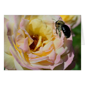 Bee And Rose Flower Photography Card