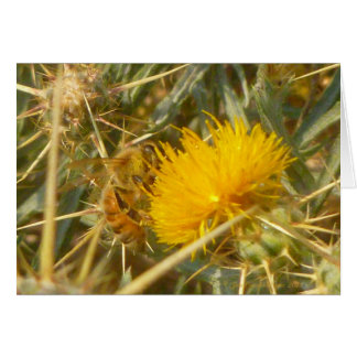 Bee and Star Thistle (Centaurea solstitialis) Card
