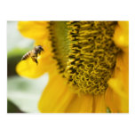 Bee and Sunflower Post Card