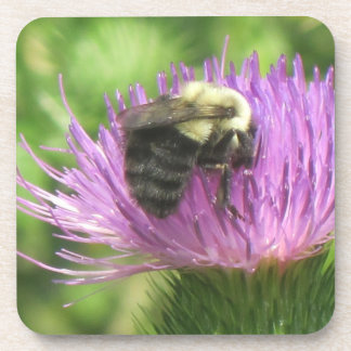 Bee and Thistle Coaster