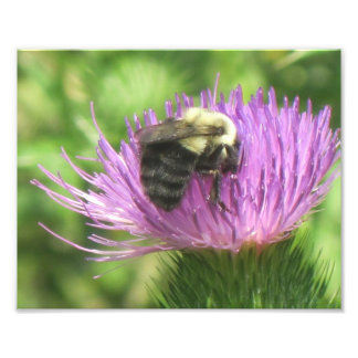 Bee And Thistle Photo Print