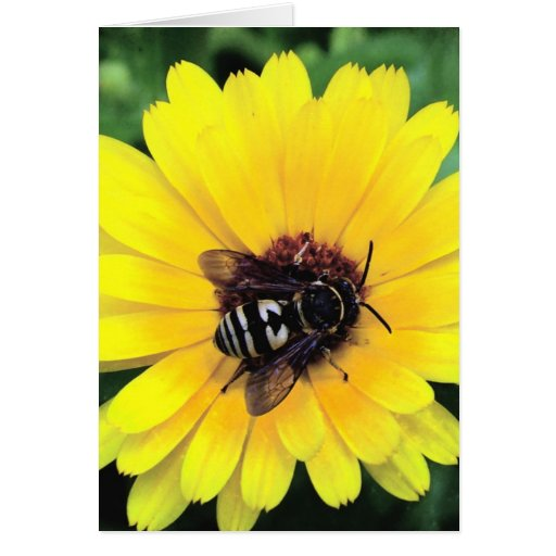 Bee and Yellow Flower Card