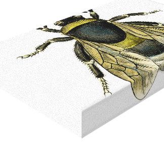 Bee antique illustration canvas print