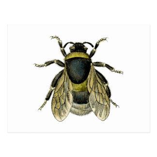 Bee antique illustration postcard