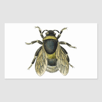 Bee antique illustration rectangular sticker