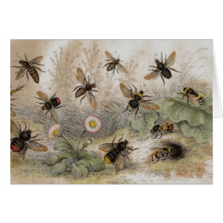Bee Antique Lithograph print card