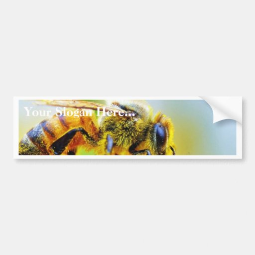 Bee At The Del Mar Fairgrounds Bumper Sticker