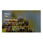 Bee At The Del Mar Fairgrounds Business Card