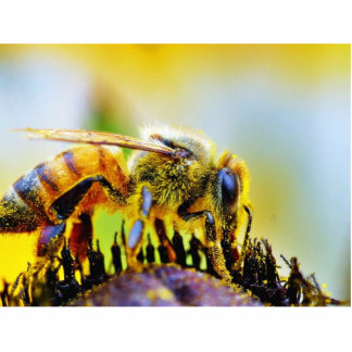 Bee At The Del Mar Fairgrounds Photo Cutout