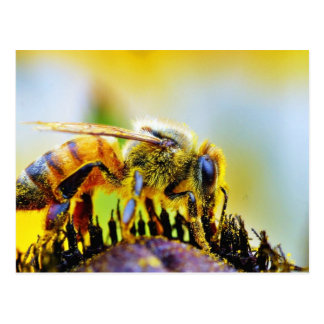 Bee At The Del Mar Fairgrounds Postcard