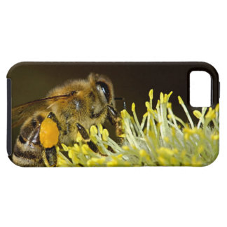 Bee at Work iPhone 5 Cases