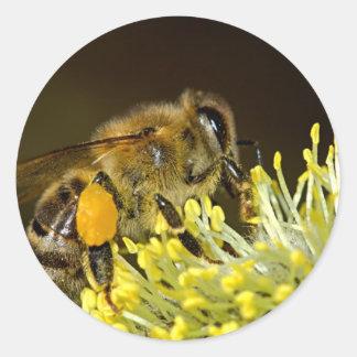 Bee at Work Classic Round Sticker
