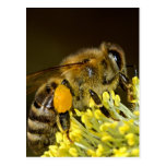 Bee at Work Postcards