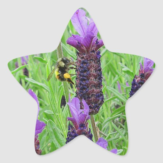 Bee Aware Star Sticker