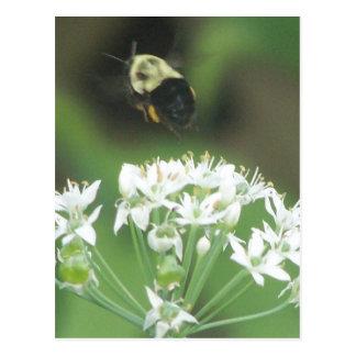 Bee Away Postcard