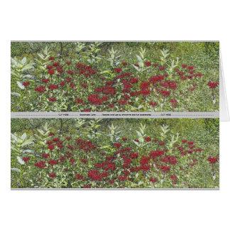 Bee Balm and Milkweed 1 Bookmark Card