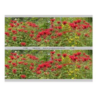 Bee Balm and Milkweed 2 Bookmark Postcard