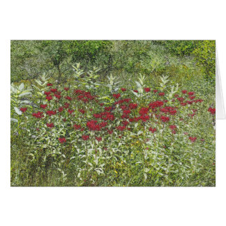 Bee Balm (Bergamont) in August Card
