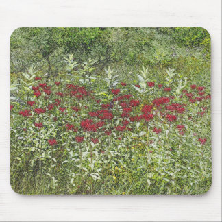 Bee Balm (Bergamont) in August Mouse Pad