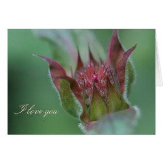 Bee Balm I Love You Card