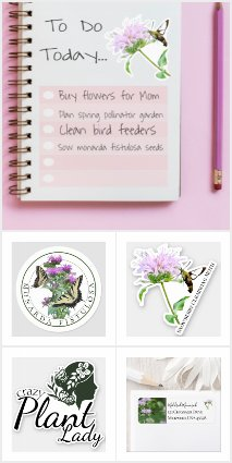 Bee Balm Touch of Elegance